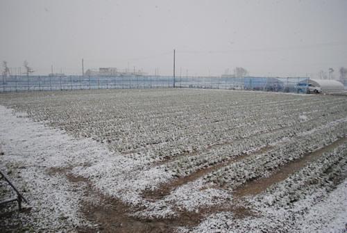 育苗場全体が白くなっていました!