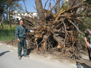 森林組合の大ベテランもびっくり。(撮影:2011年5月25日、東松島市)