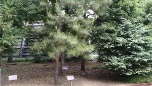 いろんな木がある日比谷公園