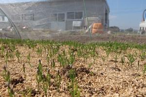 籾殻で雑草を防ぐ工夫