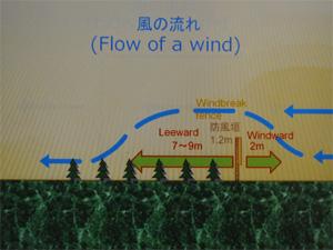 防風垣の高さは1.2m。すると、防風垣の風下に7~9m、風上に2mの防風効果が生まれます。