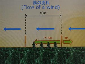 そして風下10mの地点でもう1か所設置することで、吹き溜まりが生まれ、苗木を風から守ります。
