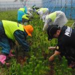 7月26日、ニコングループ社員の手で草取り