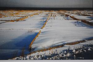 防風垣が適切な間隔で設置された箇所では、雪が同じ高さで堆積。そうでないと垣根と垣根の中間部分が風で削り取られ凹状に。
