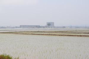 海岸林後背地の、海から2.5kmの美田園駅北側でも稲作が開始されました