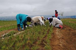 ボランティアによる草取り作業