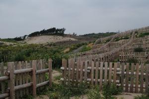 砂は強風にあおられ、20mもの幾重の砂丘を超え、 JRの線路や国道7号線、 そして人家まで駆けあがってきます。