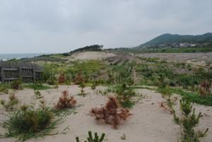標高20m程の砂丘を砂は軽く超えて、 国道やJR線の線路、民家に侵入します。
