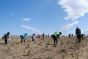 140517植栽後のお世話にボランティアが年間1,500人×8時間