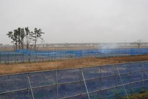 育苗場の横も、もとは防風林(10m×128m)がありました。