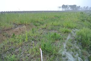 彼岸までに除草重点個所をやり遂げます