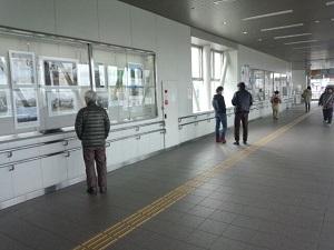 JR名取駅での写真展(~30日)。足を止めてくださる人が何人もいて嬉しかった!