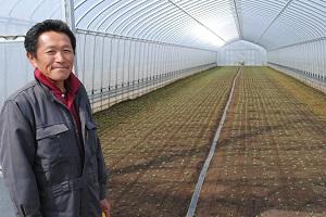 北釜耕人会は小松菜だけでなくチンゲン菜も開始。 4間ハウス38棟を3家族でフル回転。