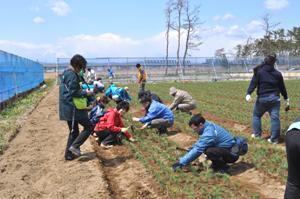 先生も床替えと播種を初体験。本当に喜んでおられたことを覚えています。  2013年4月19日