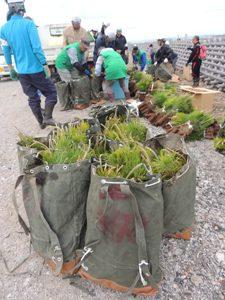 苗袋に30本の苗木を入れて何往復も…