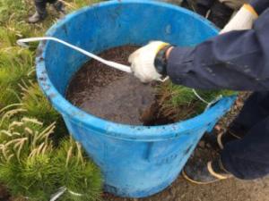 クロマツ苗の吸水ポリマーに漬ける作業