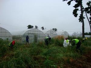 幅8mの内陸防風林にマツは1.3m間隔に植わっているのを探しながら「つぼ刈り」