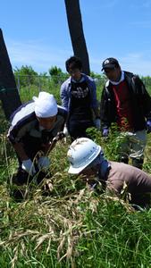 班のメンバーを前に草の刈り方のデモンストレーションをするKさん