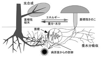 (図:明間民氏提供)
