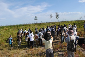 植栽基盤盛土工事が始まる直前の2014年植栽地付近。倒伏したクロマツやアシ原を、名取市海岸林踏破ツアーとして90名で7kmを歩いた。(2012年9月12日)