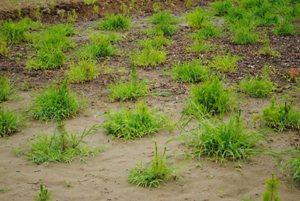 いまはこの雑草すら、水を吸い上げてくれる味方に見える。(ご都合主義ですが・・・)
