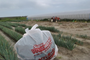 海岸林の真後ろで働いている農家の方からスイカいただきました