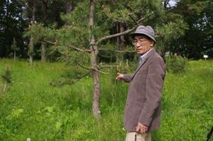 宮城県林業総合センターのマツノザイセンチュウ抵抗性クロマツ母樹林にて (2011年5月26日の初実踏調査)