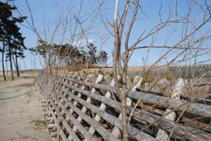 防風垣の高さは1.6m。さすがのプロもこの中まで草刈りしなかったのでしょう