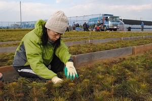 寒冷紗の中で育てていても草が出てくる。ここの圃場は他の生産者と比べて草が多いそうだ。和代さんも作業が楽しそう