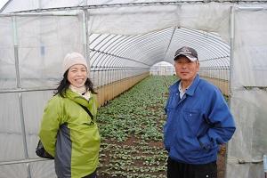 小松菜は発芽して30日くらいで出荷できるそうです