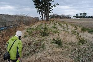 和代さんは内陸防風林を見るのは初めて