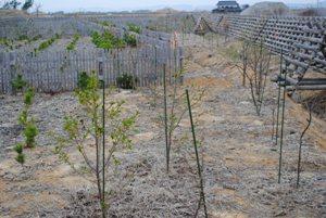 粘土質の植栽地 オレンジの目印が2016年補植