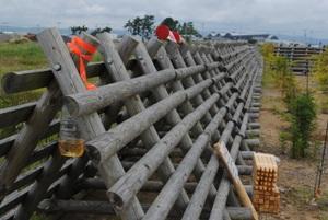 防風垣の下で雨水が入りにくいように、口は主風の反対側に(北釜地区、2015年植栽地、南西端モニタリング調査プロットNo21横)