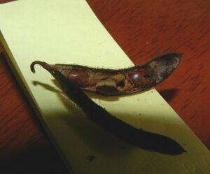 写真g(虫食い)