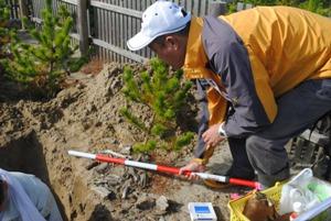 理想的土壌では、支根も理想的。50㎝横に張っていた