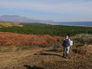 名取海岸林とほぼ同じの全長約5㎞、面積は倍の約200ha