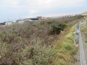 笹が茂り土砂流出はないかもしれないが、再造林は困難を極めるのだろう。