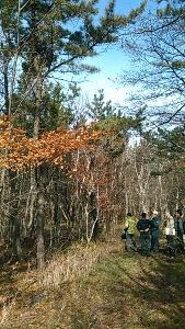 47年前クロマツを15,000本/ha植え、除伐・本数調整伐を既に7・8回実施。広葉樹は自然に生えてきたもの