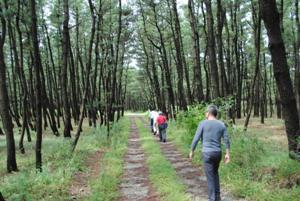 能代市風の松原 作業道とサイクリング・遊歩道兼用の道が縦横に設置。案内表示が林内に多数 市民を積極誘導してもゴミなし