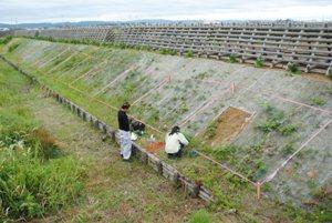 オイスカ協定区内でのニセアカシア・葛等枯殺処理調査(2016年7月)