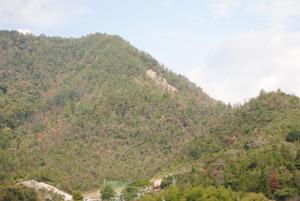 西日本某県の高速道沿いの山林すべてこの状況。灰色は枯れて数年、手前の茶色が当年枯れ。松くい虫防除を根底から諦め、すべての松を食い尽くされるまで待つ方針なのかとすら思った。(2012年)