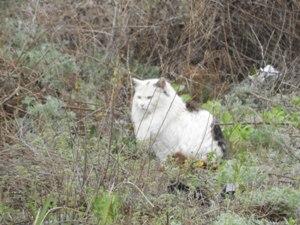 首回りがライオン化した肥満猫