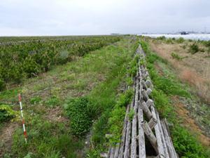 広葉樹植栽地全景(全長500m×幅6m)防潮堤・林帯幅200mのクロマツ、そして広葉樹、生物多様性配慮ゾーン、農地と続く。