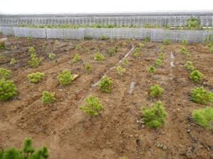 2015年植栽地南西端。0.7HAに無数の溝を設けました。一番作業が厳しいタイプの土壌。まだ完成ではありません。今春ようやくしっかりした穂をつけ、改善の兆しを感じました
