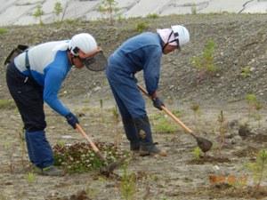 森林組合は85,000本分完了めざし連日施肥。一人500本ペース(植えられたマツにとっては一生で1回)