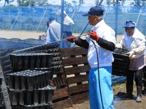 再生の会の育苗は消毒・除草が一段落したので、苗木コンテナ3,550台を洗浄開始