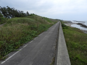 加賀海岸の最前列の典型的姿。消波ブロックも、防潮堤も、砂丘上の草もマツも、一体となって防災を担っている