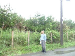 吉田さんの背丈を余裕で越える高さ!