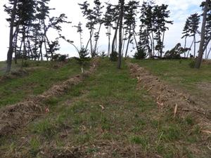 施工後。1.4m間隔で植栽可能な状況に