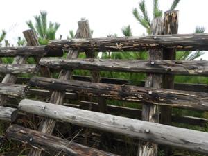 2014・15植栽地で、防風垣を登るときは注意。登るなら、ボルトの部分が折れにくい